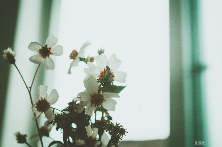 hoa 3