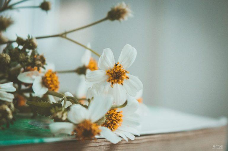 hoa.jpg